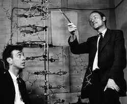 ARN (1960)