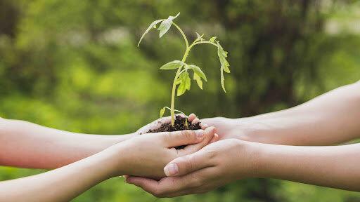 comienzo de concepto de desarrollo sustentable