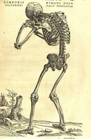 Human Anatomy book published