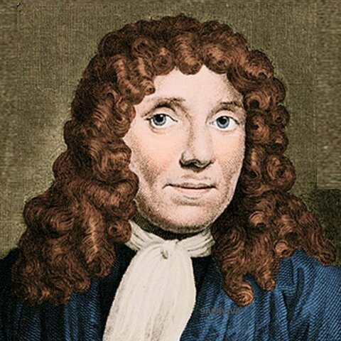 А.ван Левенгук открыл животную клетку.