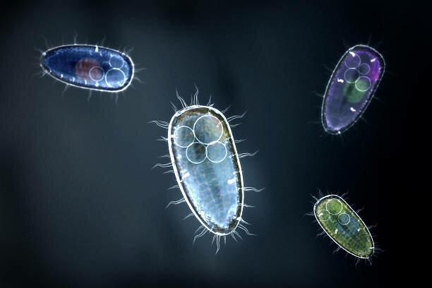 Esimesed üherakulised organismid