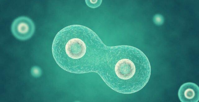 Esimesed mitmerakulised organismid