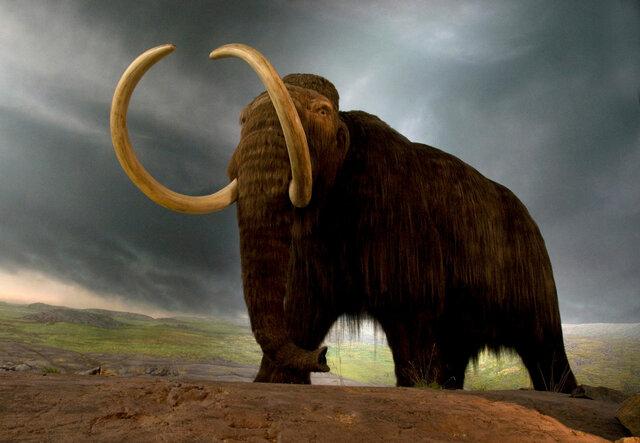 Mammutite väljasuremine