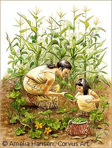 Primeras plantas domesticadas