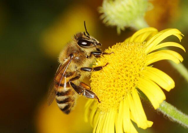 Esimesed mesilased