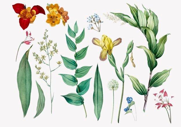 Teofrasto - Estudio de la Botanica