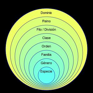 Jean-Baptiste Lamarck - Taxonomía