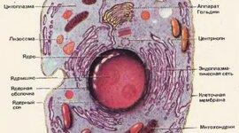 Изучение многообразия клеток timeline