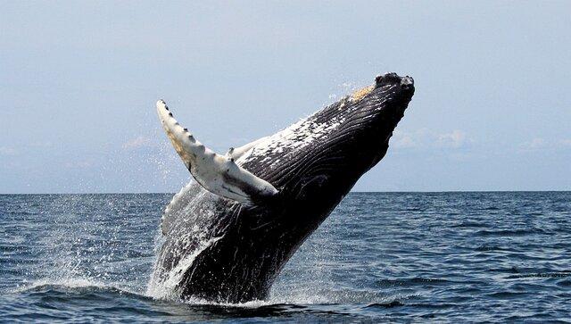Vaig veure una balena