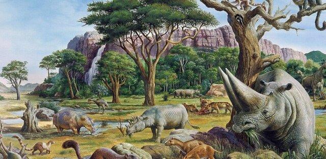 Paleogeen