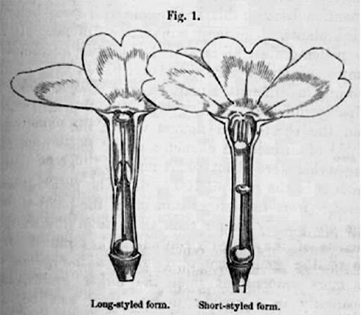 Evolution of Plants (1/2)