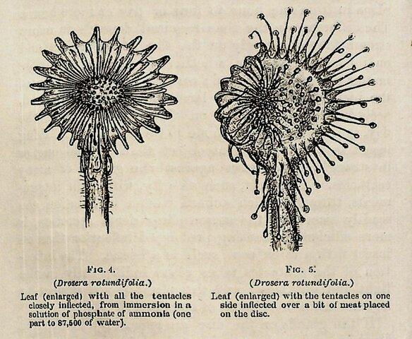 Evolution of Plants (2/2)