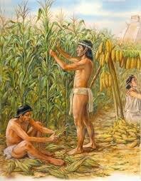 PRINCIPIOS DE LA AGRICULTURA