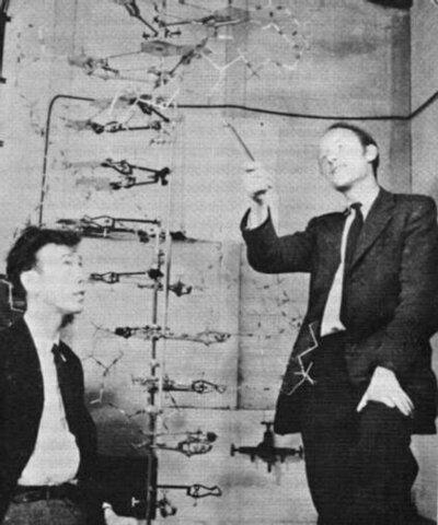 Watson and Crick second model