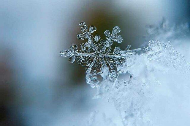 1r cop tocant la neu