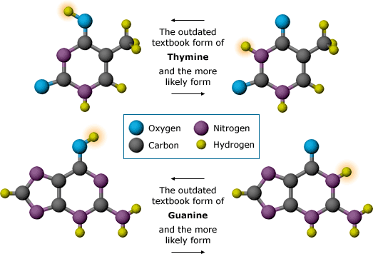 1953 - Nitrogenous structure bases