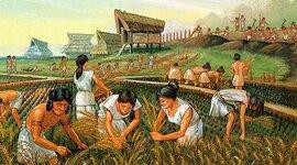 Evolución Indígena timeline