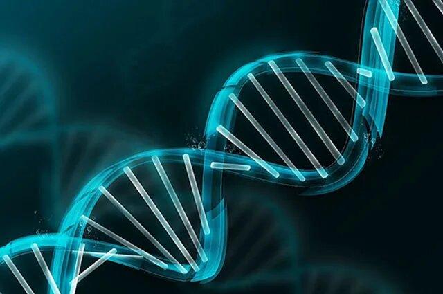El ADN basura no es un desecho