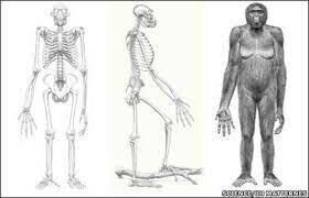 El homínido más antiguo, hallado