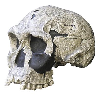 Homos Paleolítico inferior