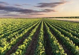 Rotacion Trienal En Agricultura