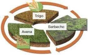 Rotación trineal en agruicultura