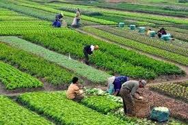 La rotacion trienal en agricultura