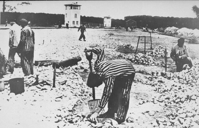 Forced into labor camps