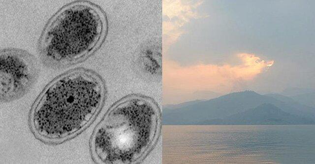 11:00 AM - Inicios de la vida microbiana