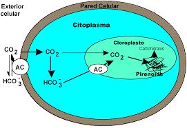 13:00 PM - Aparición de la fotosíntesis oxigenada