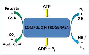 16:00 PM - Crisis del nitrógeno, glaciación de Pongola y nitrogenasa