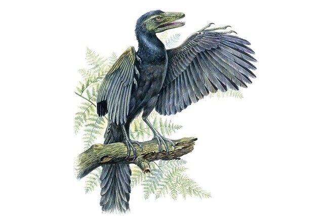 Esimene lind Ürglind