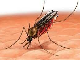 La malaria  va reapareixer amb força  en Venezuela