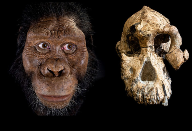 australopithecus anemsis