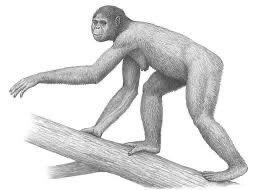 10, 000, 000 años. El primer bípedo
