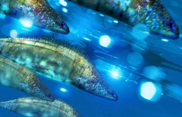 Esimene kala ja selgroogne Haikouichthys