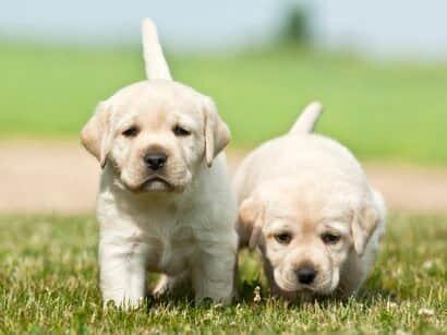 Els meus dos primers gossos