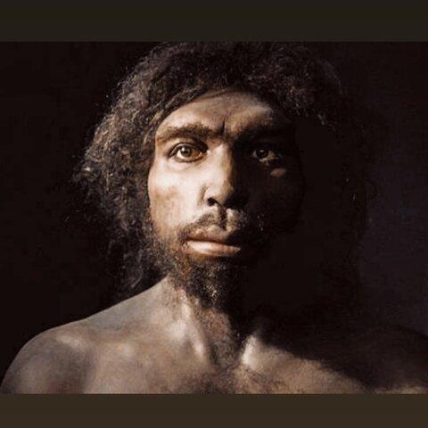 Homo Antecessor y Heidelbergensis
