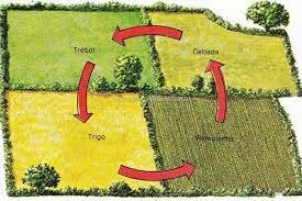 Rotación trienal en agricultura