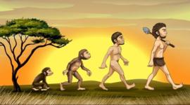 LeticiaLira_LineadelTiempo Origen del hombre: Evolución timeline