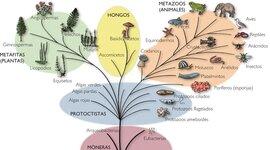 Evolución árbol filogenético timeline