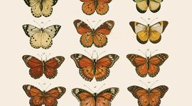 Grandes hitos de la Historia de la Biología y la Geología timeline