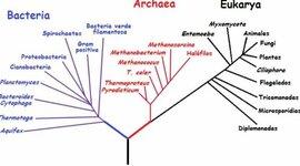 Arbol filogenetico timeline