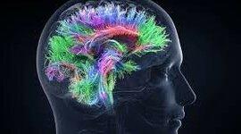 Historia de la neurociencia timeline