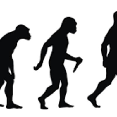 Origen del hombre: Evolución. timeline