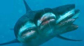 Tiempo de Vida de los tiburones timeline