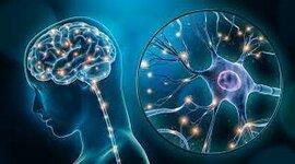 Desarrollo de la Neuropsicología timeline