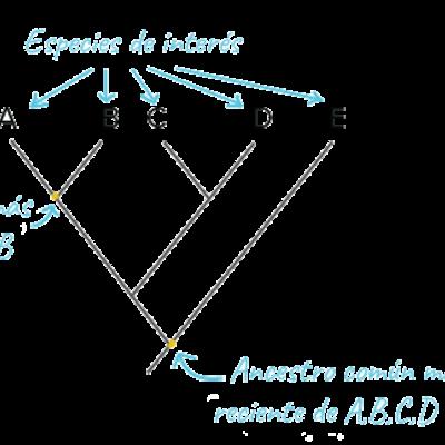 Árboles Filogenéticos timeline