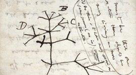 Árbol Filogenético timeline