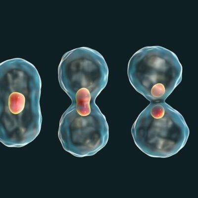 Reproducción Celular timeline